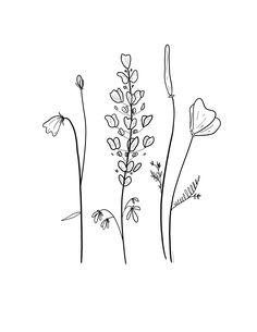 Small Easy Drawings, Easy Flower Drawings, Simple Line Drawings, Flower Sketches, Easy To Draw Flowers, Simple Flower Drawing, Plant Sketches, Wildflower Drawing, Wildflower Tattoo