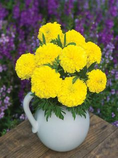 Add a delightful touch to your breakfast table, with vibrant marigolds. This flower gets it name from it's towering height and enormous blooms.
