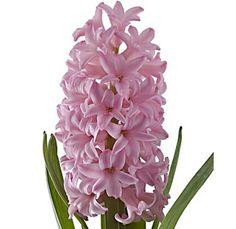 Love this flower