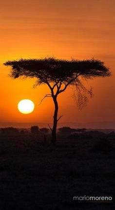The sun rises in Ndutu in the southern region of the famous Serengeti Ecosystem…