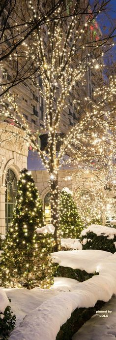 Love all white outdoor Christmas lights!