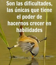 Filosofia Smart Quotes, Best Quotes, Life Quotes, Frases Humor, Life Philosophy, Spanish Quotes, Smart People, Insomnia, Wise Words