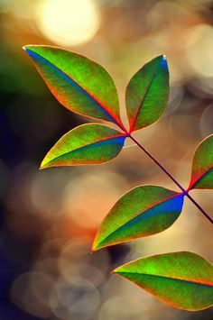 "me-lapislazuli: ""Sun touched "" Beautiful Nature Wallpaper, Colorful Wallpaper, Flower Wallpaper, Beautiful Flowers, Photo Background Images, Photo Backgrounds, Wallpaper Backgrounds, Dame Nature, Fotografia Macro"
