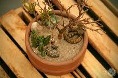 Resultado de imagem para mini jardim cactos suculentas
