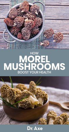 Morel mushrooms are a type of edible mushroom and are typically foraged instead of farmed. Learn about their health benefits plus how to find and then use. Health Benefits Of Mushrooms, Mushroom Benefits, Health Benefits Of Ginger, Morel Mushroom Recipes, Mushroom Kits, Mushroom Food, Mushroom Spores, Maitake Mushroom, Edible Mushrooms