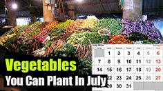 Vegetables You Can Plant In July,garden,gardening,vegetable,vegetables,homesteading,late garden,what to plant,shtf,prepping,survival,prepping,preparedness,