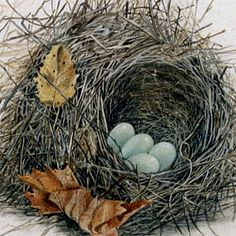 Watercolor Birds | ... original watercolor and gouache paintings of nests built by birds of