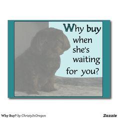 Why Buy? Postcard