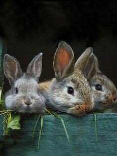 bunny, rabbit, and animal image Funny Bunnies, Baby Bunnies, Cute Bunny, Bunny Rabbits, Bunny Pics, Adorable Bunnies, Easter Bunny, Animals And Pets, Baby Animals