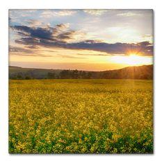 Zlatavá pole - Fotoobraz 30x30cm