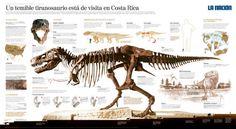 Tyranossaurus - Manuel Canales