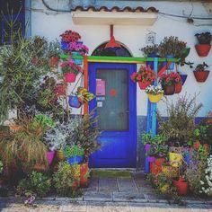 Il paradiso all'improvviso  #bari #muraglia #weareinpuglia #landscape #nature #flowers #flowerlovers #blue #colors #lifeisgood #springtime #instagramers #igers #igerspuglia #igersbari #instagood #instamood #feelings #instalove #puglia #italy #italia #random #picoftheday #ShareTheLove