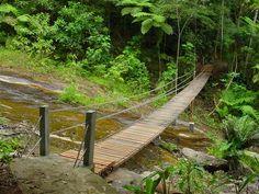 Parque Nacional da Tijuca - Rio de Janeiro RJ