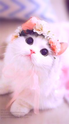 Cute Animals List, Cute Kawaii Animals, Cute Little Animals, Funny Cat Wallpaper, Cute Panda Wallpaper, Cute Cartoon Wallpapers, Wallpaper Wallpapers, Cute Baby Cats, Cute Cats And Dogs
