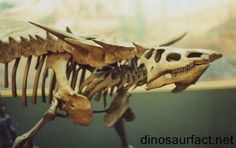 The #Desmatosuchus is one of the largest known aetosaurs.