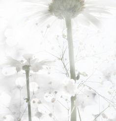 White Feeling (by Delire Lucide)