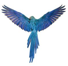 Ideas for blue bird photography awesome Pretty Birds, Beautiful Birds, Animals Beautiful, Parrot Wings, Bird Wings, Tropical Birds, Colorful Birds, Ara Bleu, Funny Bird
