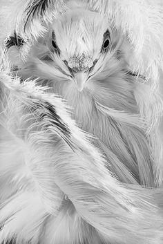 #white #bird