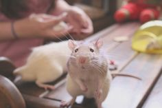 """Impossible not to say """"Aaaaaw"""" :) by Honey Pie!, via Flickr"""