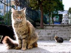 Cats in Istanbul :)