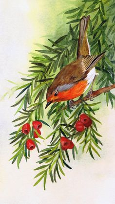 Robin on yew by Julie Horner