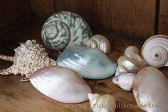 pretty turquoise seashells