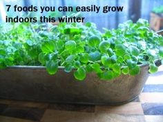 7 Foods you can grow indoors this winter