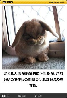 hide and seek, unskilled rabbit. I watched for a while because it is so cute. Animals And Pets, Baby Animals, Cute Animals, Funny Images, Funny Pictures, Japan, Stuffed Toys Patterns, Funny Comics, Cute Kids