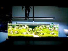 LED Aquarium Lighting: The Buyer's Guide | Home Aquaria