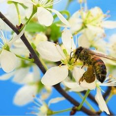 Pure Honey, Wild Honey, Raw Honey, Saffron Spice, Superfoods, Healthy Lifestyle, Spices, Bee, Luxury