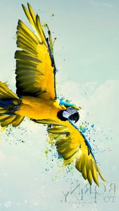 Born To Fly Parrot Whatsapp Wallpaper  - Born To Fly Parrot Whatsapp Wallpaper  - https://whatsappwallpapers.com/born-to-fly-parrot-whatsapp-wallpaper/ - Animals, download, Free, HD, wallpaper, wallpapers, whatsapp, whatsapp wallpaper, Whatsapp Wallpaper HD, whatsapp wallpapers, Whatsapp Wallpapers Hd - #whatsapp #wallpaper