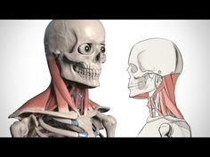 How to Draw the Neck - Anatomy for Artists | Proko