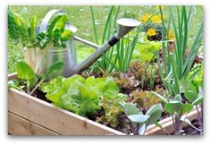 Free worksheets for planning a vegetable garden layout for a raised bed, square foot, or traditional backyard garden.