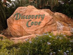 Kasey Knows Orlando: Discovery Cove: Tips Guide!