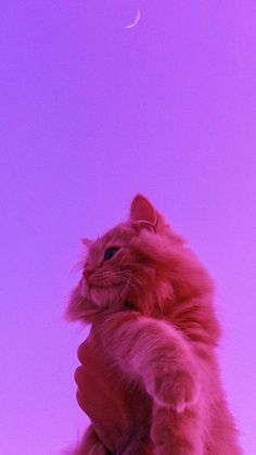 Wallpaper Gatos, Funny Cat Wallpaper, Pink Wallpaper Girly, Iphone Wallpaper Themes, Hipster Wallpaper, Cute Wallpapers, Cute Baby Cats, Cute Funny Animals, Cute Baby Animals