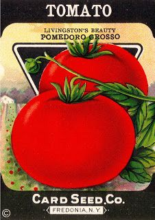 Vintage Seed Packets and Crate Labels - Tomato Pomedoro Rosso Card Seed Co