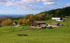 Merck Forest & Farmland Center, Rupert, VT.  I walked the trails with my dogs.