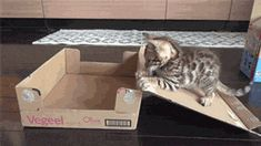 And This Is How You Put Yourself In A Box