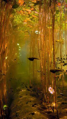 Water Tadpoles Underwater iPhone 8 wallpaper Wasser Kaulquappen Unterwasser iPhone 8 Tapete This image has. Image Nature, Nature Aesthetic, Aesthetic Green, Belle Photo, Pretty Pictures, High Pictures, Aesthetic Wallpapers, Aesthetic Pictures, Mother Nature