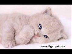http://www.ilgazpet.com kedi köpek kuş balık yem mama akvaryum malzemeleri aksesuarları resim videoları