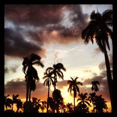 Sunset at Mar-a-Lago Designer Dog Carriers, Designer Dog Clothes, Dog Sweaters, Dog Dresses, Dog Coats, Dog Design, Palm Beach, Beaches, Places To Go