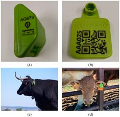 A Low-Cost IoT-Based System to Monitor the Location of a Whole Herd Livestock Farming, Hardware Components, Ear Tag, Monitor, Cow, Base, Detail, Projects, Log Projects