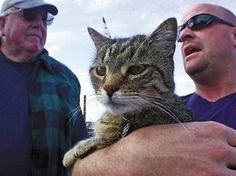 """How did I not know about this cat? 