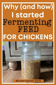 What Can Chickens Eat, Pet Chickens, Raising Chickens, Chickens Backyard, Chicken Eating, Chicken Feed, Canned Chicken, Healthy Chicken, All You Need Is