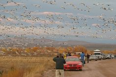Winter Birding in Socorro, New Mexico.  See hundreds of species while driving around in your car.  Cranes, ducks, eagles and road runners.