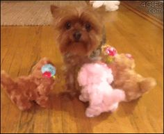 Dog Is Not Amused By The Toy Dogs Bumping Against Him
