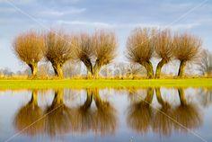 Wilgen langs de IJssel door Huub Veldhuijzen