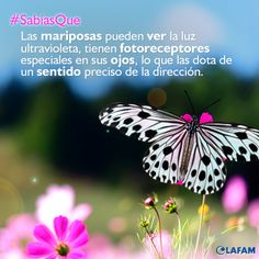 #Mariposa #Visión