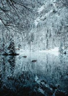 Winter Images, Winter Pictures, Nature Pictures, Art Pictures, Holiday Images, Snow Photography, Conceptual Photography, Landscape Photography, Winter Nature Photography
