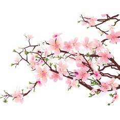 Cherry Blossom Clip Art Free ClipArt Best ❤ liked on Polyvore featuring fillers and effect